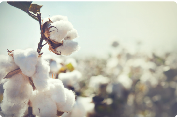 cotton ctrm