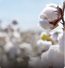 ctrm for cotton
