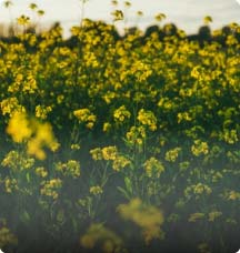 Oilseed CTRM
