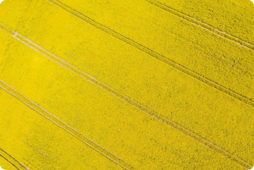 ags ctrm oilseed